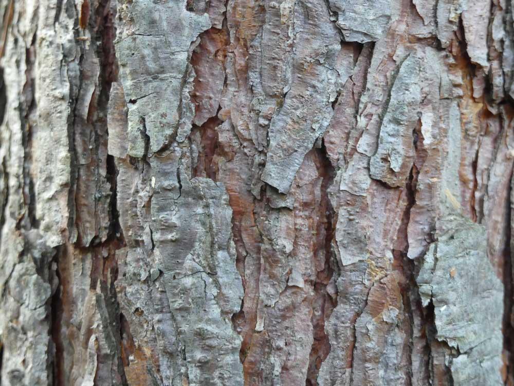 Marquage des pins en forêt